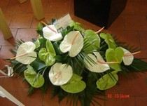Anthurium Spray